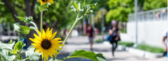 Flowers on campus and people walking on the sidewalk
