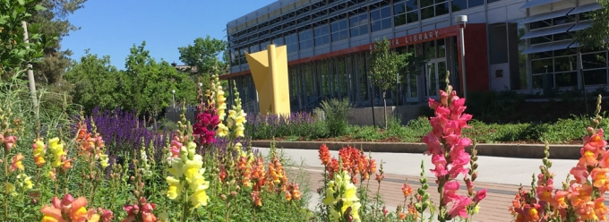 Spring flowers outside Auraria Library